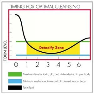 The Detoxification Zone Is The Window In Which Your Urine And Blood Will Be Free From All Toxins.