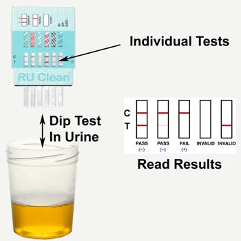 Instructions For The Use Of RU Clean. How To Read The Results Of Your RU Clean Instructions For The Use Of RU Clean 6 Drug Urine Test.